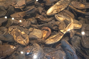 Shoes from the victims were collected from a Holocaust prison camp and are now on display.