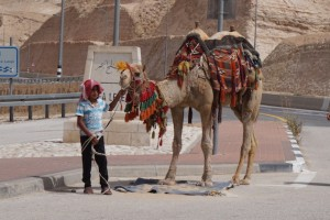 Camel rides await as you stop for refreshments on your way to the Dead Sea.